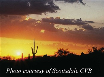desert sunset cactus