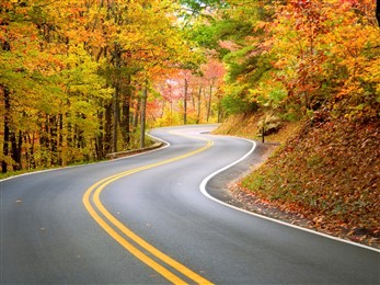 road through fall leaves