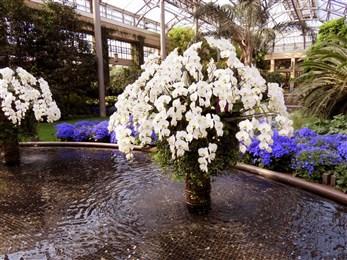 Longwood Gardens flower