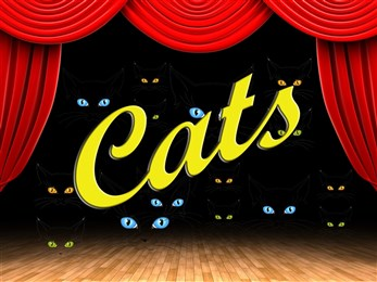 Cats show