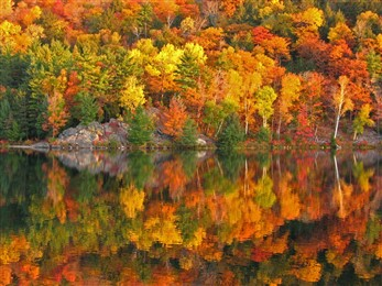 fall leaves reflected in water