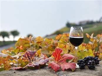 wine fall scene